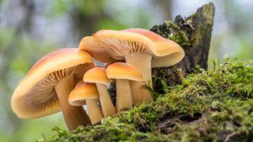 Welche positiven Auswirkungen Pilze auf ihren Körper haben